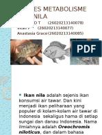 Proses Metabolisme Ikan Nila