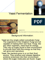 Yeast Fermentation Lab (1)