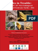 Top 25 Turtles in Trouble 2011 1