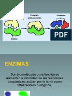 Clase Enzimas