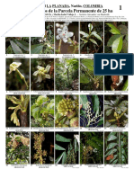 Arboles y Arbusto de La PPM 25 Ha Colmbia