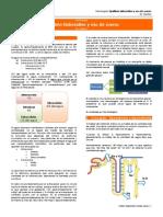 Equilibrio Hidrosalino y Uso de Sueros (Dr. Muñoz)