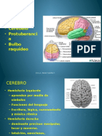 Anatomia Aplicada 12º Sistema Nervioso Cerebro Vias 1