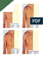 Anatomia Funzionale FT