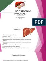 higado vesicula y pancreas