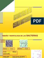 Estructura celula procariota.pdf