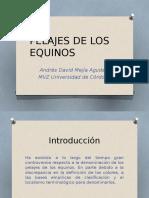Clase Pelajes de Los Equinos