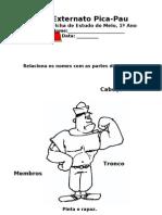 As partes do corpo humano - cabeça, tronco e membros