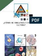 Niveles de Organizacion_exp
