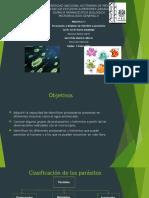 Protozoarios-y-helmintos