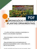 Flores e Plantas Ornamentais