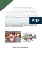 Laporan Sistem Pencernaan Pada Ikan
