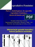 Embriogênese Do Aparelho Reprodutivo Feminino e Desenvolvimento Puberal