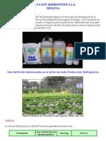 Solución Hidropónica La Molina