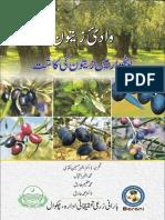 Olive Cultivation in Pothwar