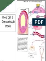 2 Cell 2 Gonadotropin