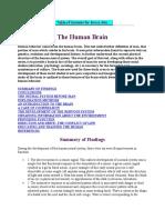 3 the Human Brain
