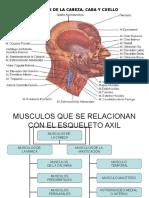 anatmia de Musculos Cara y Cuello