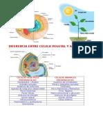 Celulas Vegetal y Animal