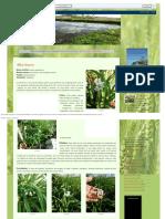 Faroleco_ Plantas Aromáticas2