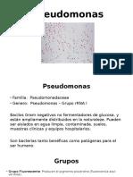 Pseudomonas y Burkholderia