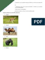20 Vertebrados y 20 Invertebrados Pequeña Definicion Cu