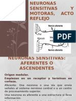 Neuronas Sensitivas y Motoras