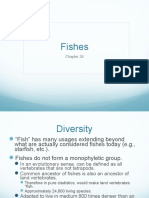 24._fishes.ppt