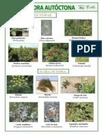 Flora Autóctona Dunas