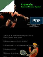 Anatomy Músculos miembro superior  Prof Tiznado