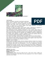 ERVAS PORTALAXÉ2.doc