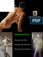 Músculos tronco muscle Prof Tiznado UACh