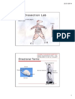 rat dissection