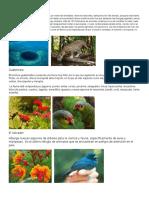 Flora y Fauna Centro