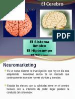 El Cerebro - Neuromarketing