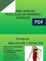 Prueba Muscular Miembro Superior