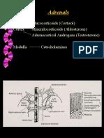 4 Endo - Adrenal
