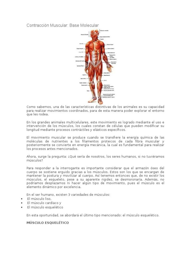 Contracción Muscular.docx