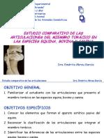 Articulacion m. Toracico (Sosten Pasivo)