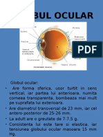 Globul Ocular