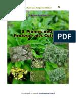 5 Plantes Pour Proteger Naturellement Mes Cultures