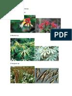 Herbário de Plantas Tóxicas