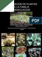 20_Propagacion_de_plantas_de_la_familia_crassulaceae.Omar_Gonzalez_Zorzano.pdf