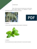 Album de Las Plantas Medicinales