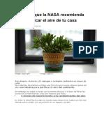 Plantas Para Purificar El Aire