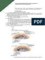 290208427 Anatomi Fisiologi Abdomen