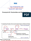 1-Nucleotides and Nucleic Acids