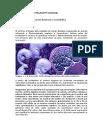 Neurociencia, Estimulación y Lenguaje