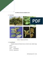 daun jati belanda sebagai antihiperlipidemia