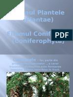 Regnul Plantele (Plantae)